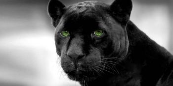 black_panther_02